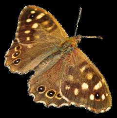 aesthetic vintage butterfly freetoedit