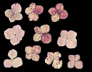 freetoedit flower flowers aesthetic vintage