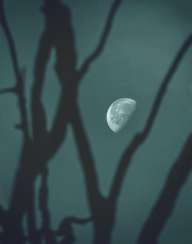#nature #endofthedayatthebeach #twilight #driedbranches #silhouettes #moon #themoonabove #moonfase #warmweather #summertime #lowangleshot #naturephotography