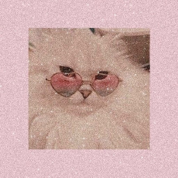 cats pinkaesthetic catedit animals glasses dontedit dontsteal dontremixthis dontrepostwithoutcredit donteditthisgorgeouspieceofart donteditwithoutcredit    my donteditwithoutcredit