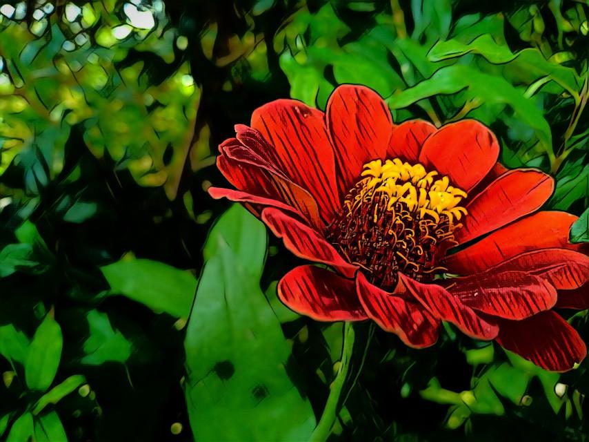 Red flower #pink #pinkflowers #photo #photooftheday #photogrid #photoshoot #photographer #redflower #photograph #photochallenge #photoftheday #photoaday #photoofday #photoday #photogram #pic #picoftheday #picstitch #picture #piccollage #pictureoftheday #pictures #qayoumkhanphotography #Qayoumkhan27 #qatar.
