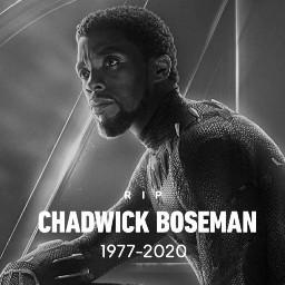 marvel chadwickboseman blackpanther t'challa rip restinpeace :( fan fanfiction t