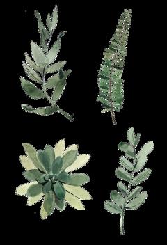 freetoedit nature paper papel collage tumblr colagem natureza planta