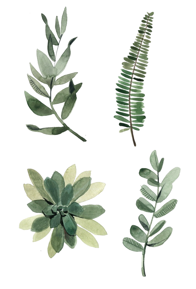 #freetoedit #nature #paper #papel #collage #tumblr #colagem #natureza #planta