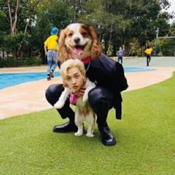 freetoedit cursedmemes faceswap channie dog