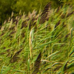 timothygrass vegetation waterplants thefoliage windydalakelife portraitofcolor botanical lakescape landscape naturetheme desktop fullframe myphotography nikond5600 editwithphotoshop