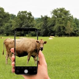 freetoedit photomanipulation grasslands cows camera