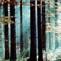 freetoedit forest myphoto myclick blackforest