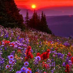 freetoedit nature magical atmosphere art picsart glitter glittery