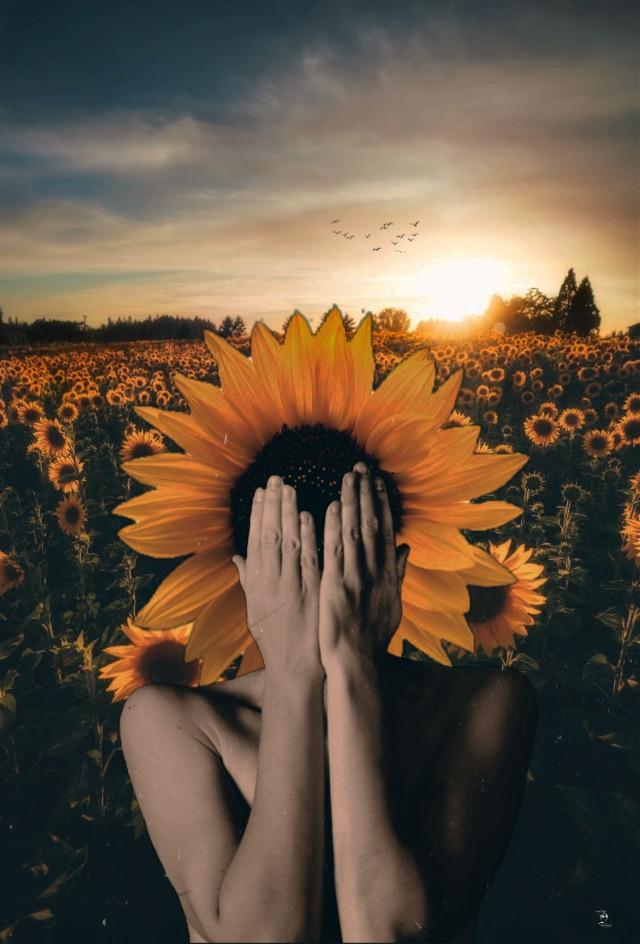 El llanto de mi girasol...  #surreal  #girasol  #sunflower  #fauspre  #madewithpicsart  #madebyme