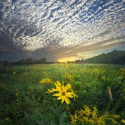 freetoedit remixit nature landscapephotography beauty pretty landscape flowers daisies love sunset summer wildflowers hdr follow fanart usa
