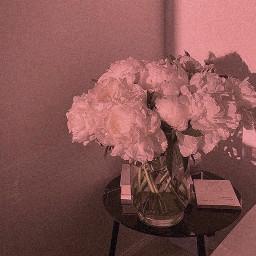 freetoedit wallpapers wallpaper simple flowers minimal roomdecor nature whiterose roses minimalist whiteaesthetic