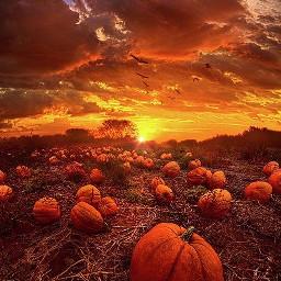 freetoedit fallwallpaper autumnwallpaper fall autumn