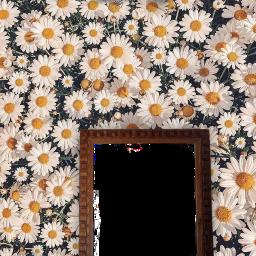 adesivo follow asthetic edit moldura espelho flores flores🌸 flowers angel junghoseok experiment experimenta teste aesthetic astethic asthetics freetoedit