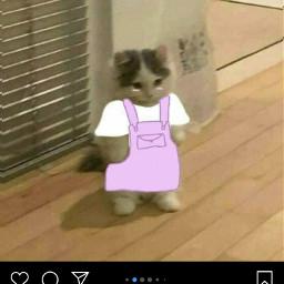 pfp cat catpfp cleanmeme meme frog frogpfp catcleanpfp catlove indie rock draw