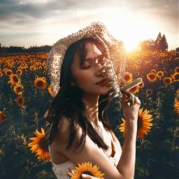 madewithpicsart madebyme fauspre flower sunflower sunflowerselfie landscape love living feeling yellow photography freetoedit