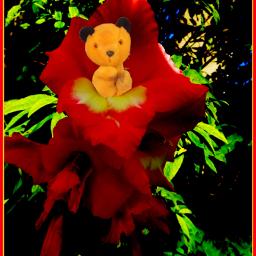 photography nature flower garden gladioli rtfartee myphoto myedit mysticker focalzoom colourchange