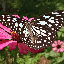 butterfly photography nature kerala india