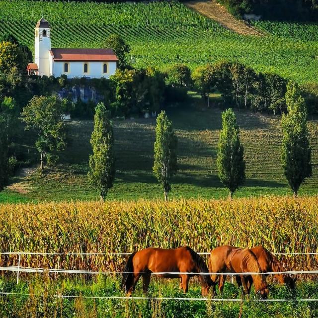 #suisse #switzerland#summer