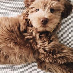 dog aesthetic doggo doggie dogs cute puppy pupper pup fluff fluffy doglife cutie snoot doglove doglover puppyeyes awww asthetic awwwww
