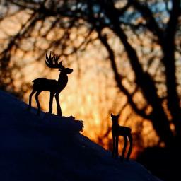 dear sunset freetoedit pcgoldenhour goldenhour