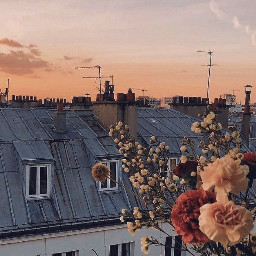 aesthetic asthetic flower flowers rose pretty balcony roof roofs cloud clouds sunset sunrise sunsets sunrises wildflowers window windows vsco