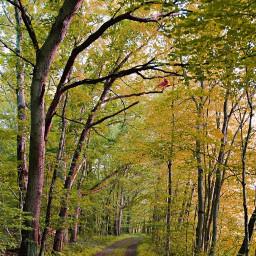 freetoedit autumn fall myedit outdoors