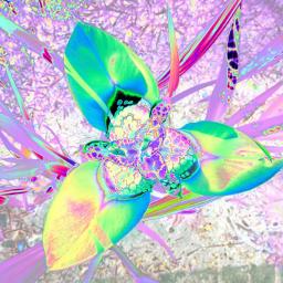 photography flower nature flora garden rtfartee myphoto myedit curvestool colourchange