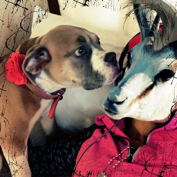 mydog myart mygoat goat dog love mansbestfriend curiosity