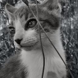 freetoedit blackandwhite catlover catsphotography catlove pcblack