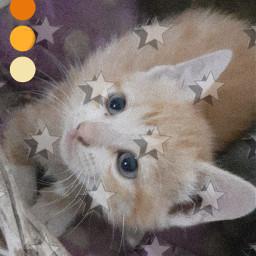 freetoedit cats fotoedit dibujo idk