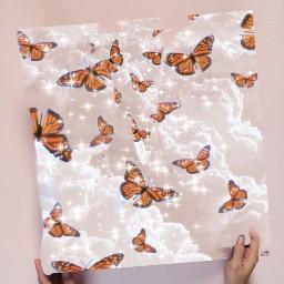 butterfly ircdesignapillow designapillow freetoedit