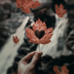 freetoedit heart autumnleaves autumn surreal