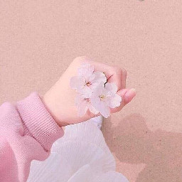 freetoedit pink pastelpink pastelaesthetic pastelpinkaesthetic aesthiec flower