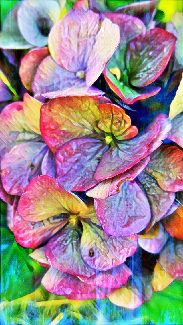 #naturephotography #flowers #hortensia #garden #october2020 #autumn #myart #artisticportrait #magiceffect #colorful