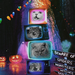 halloween pumpkins television colorful spooky lights cat blackcat madewithpicsart replay freetoedit