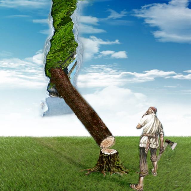 #tree #brokentree #wood #sky #woodshopper