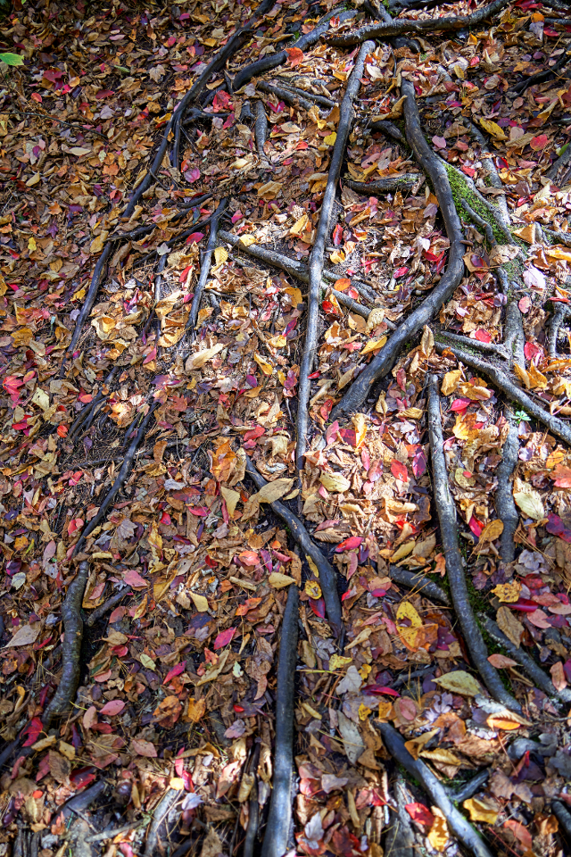 #outdoorphotography #walkinthewoods #branches #leavs #autumncolors #naturephotography #natureabstraction