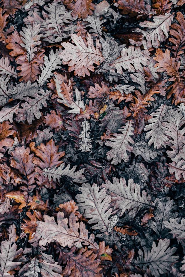 See things differently. Unsplash (Annie Spratt) #nature #autumn #fall #leaves #freetoedit