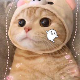 kittycado