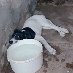 perro perros dog dogs hermosa preciosa freetoedit pcmypetsbestportrait mypetsbestportrait