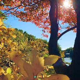 fallingforu foliage autumn colorful newengland boston