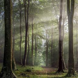 forest wood weald jungle tree view pohon hutan kebun background freetoedit