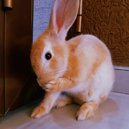 rabbit freeedition hearts home goovibes freetoedit