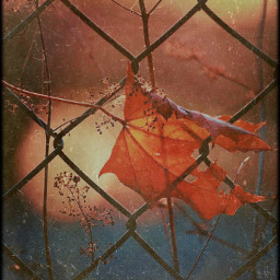 replay makeawesome heypicsart spider rose flower flowers flowereyes photo photography picsart replayedit picsartedit picsart100million freetoedit pic autumn autumnleaf autumnart rainyday sunset tag goodnight happy autumncolors