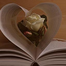 freetoedit myphotography books roses pcmyfavoritebook