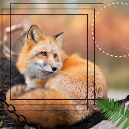 redfox autumn fox leaves осень рыжий рыжаялиса лиса лис листья октябрь хеллоуин freetoedit