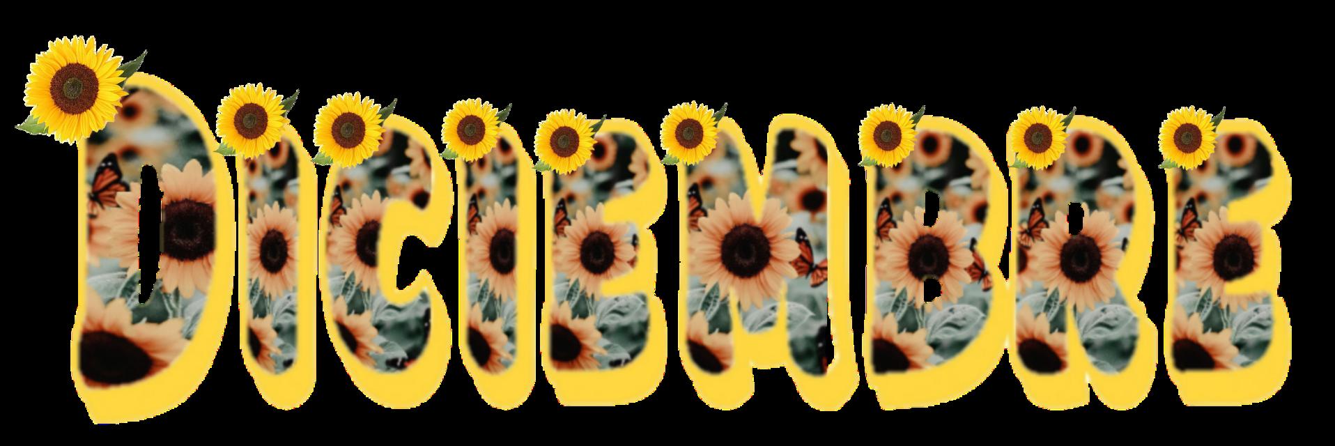 Diciembre #diciembre #december #decembercalendar #girasol #girassol #girassol🌻  #girasol🌻 #girasole  #girasoles🌻 #girasoles  #sunflower #sunflowers #sunflowersticker #framephotograph #framedpicture #stickers #freetoedit #hermoso #beautiful