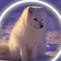 wolf wolflover white whiteaesthetic small animal animallover colddays littlewolf freetoedit rcneonlight neonlight