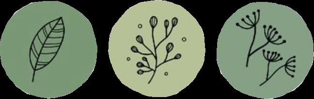 green greenaesthetic greenminimalism cute sticker circle plant flower leaf leaves greensticker vine art interesting france tree aesthetic pretty fun stickers artistic beautiful vert verte freetoedit